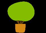 Buschpflanzen